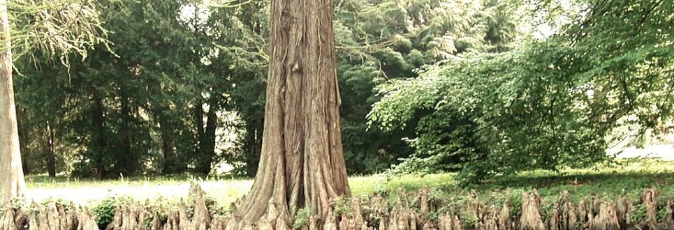cypress-965x330